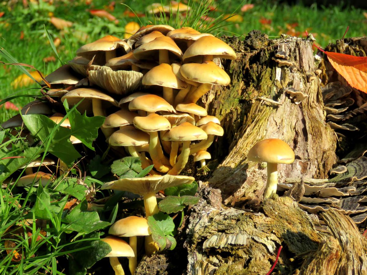 Images Gratuites : arbre, forêt, bûche, l'automne ...
