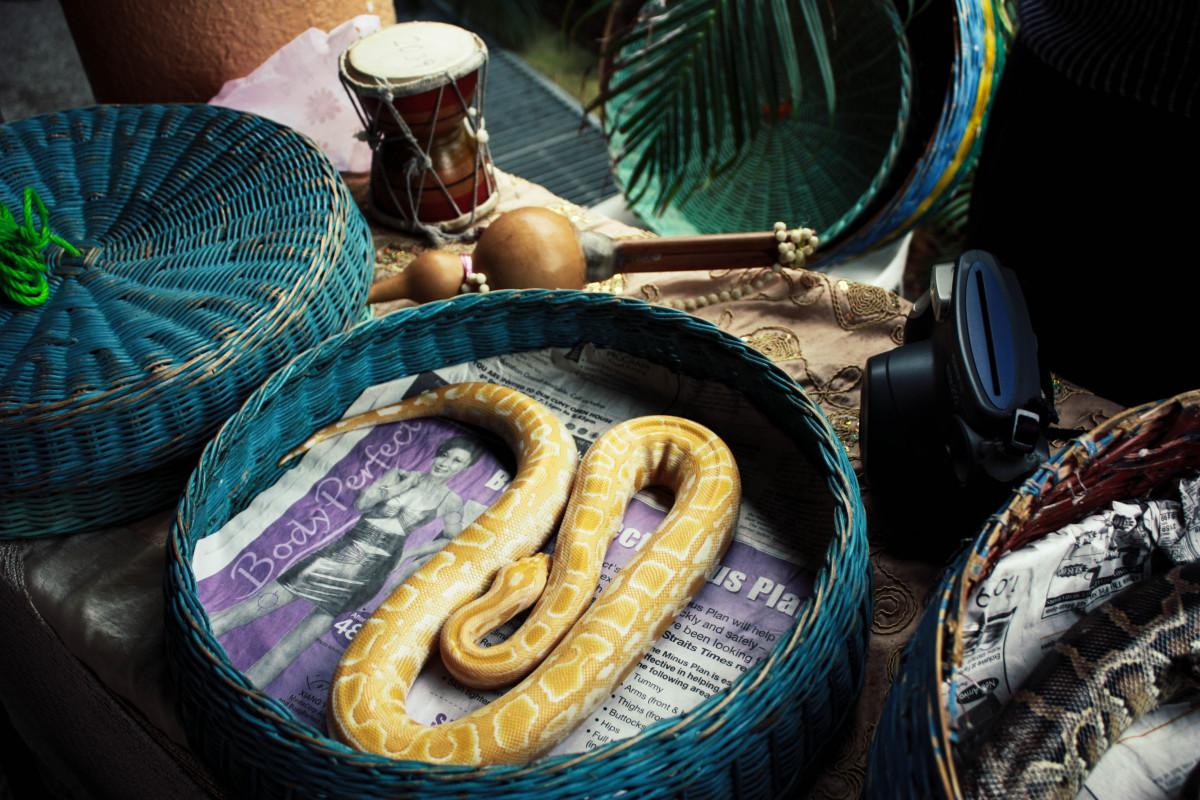 блюда из змей картинки местечко для