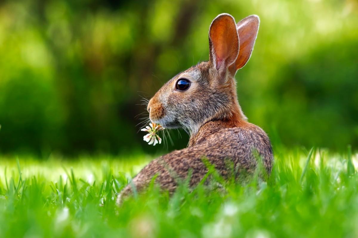 кроликов картинки