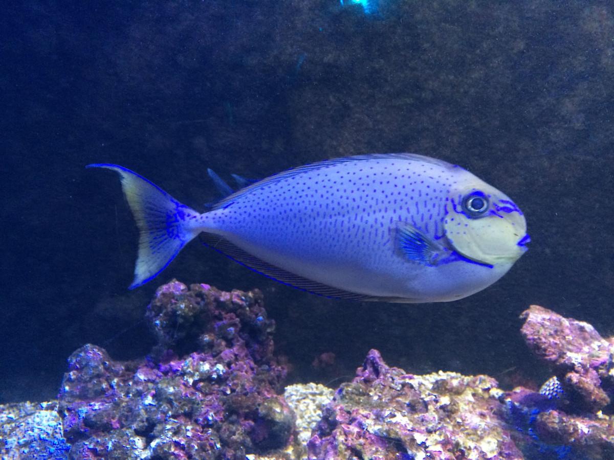 Ryby v moři zdarma