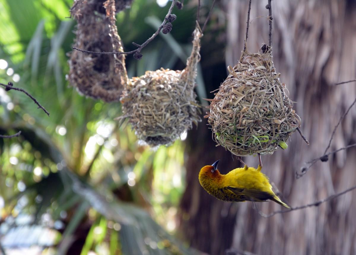 гнездо попугая картинки здоровье растения