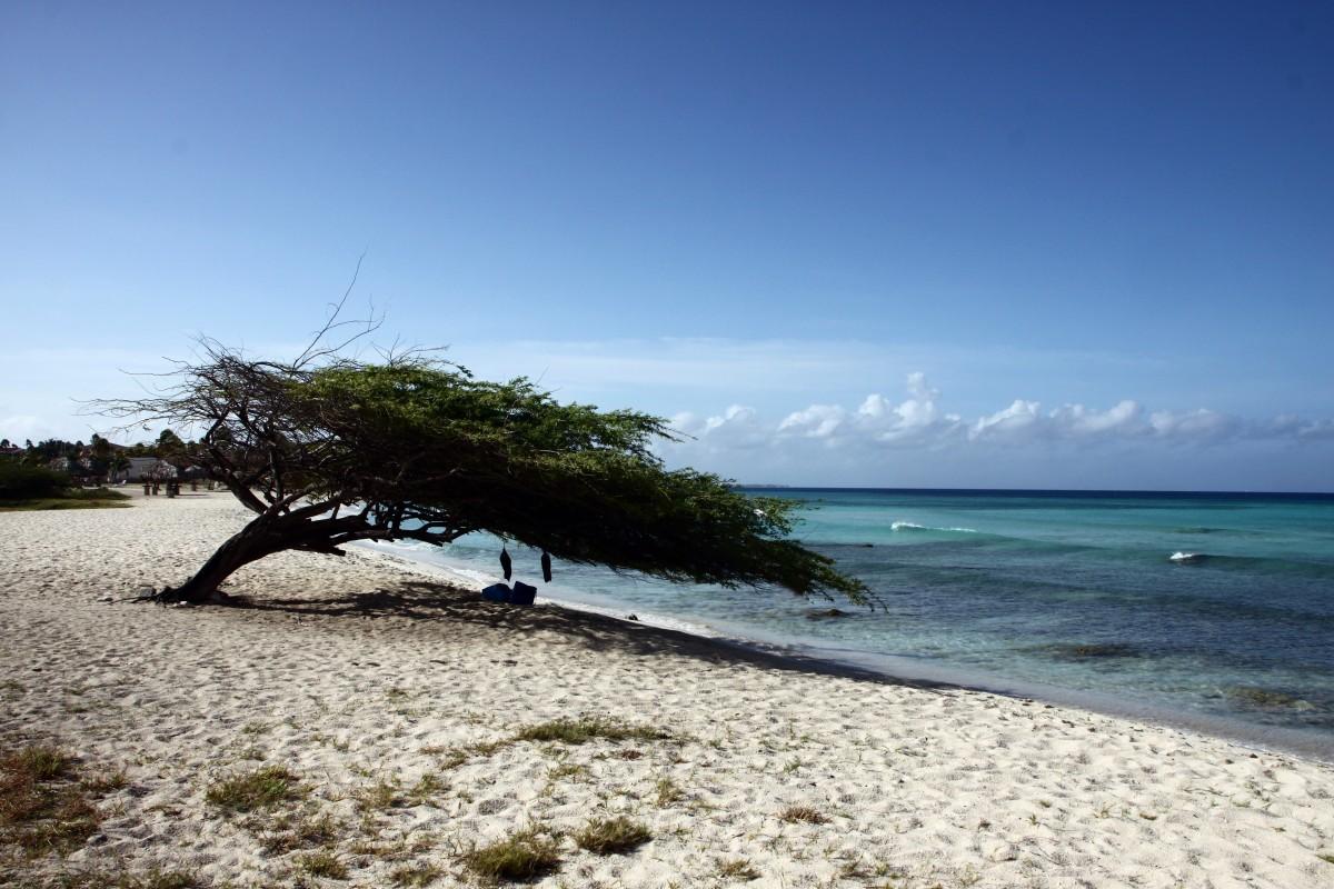 strand zee kust boom zand oceaan horizon hemel kust- Golf wind vakantie vakantie baai eiland waterlichaam caribbean Aruba kaap zandstrand Zuid zee abc eilanden arecales Kleine Antillen