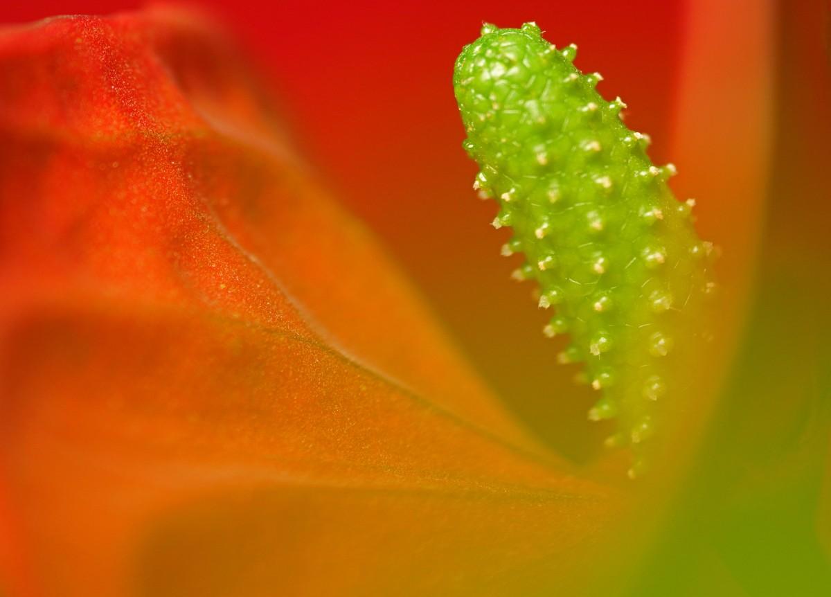 Kostenlose foto : Natur, Tau, Pflanze, Fotografie, Blatt ...