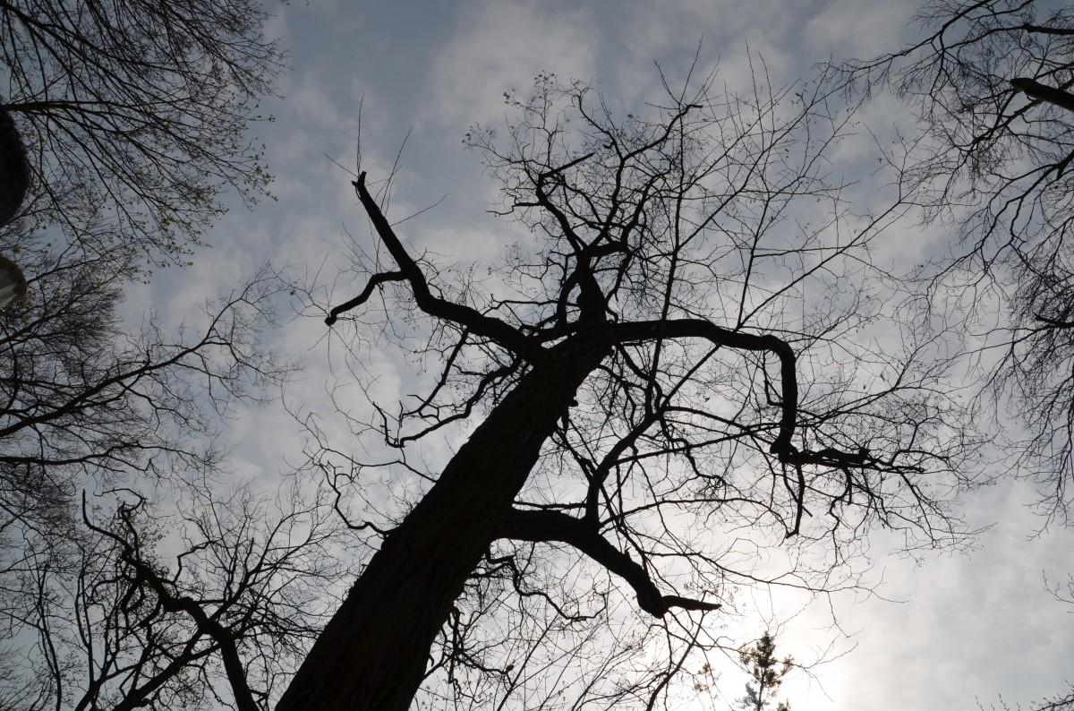 Gambar Pohon Alam Hutan Cabang Bayangan Hitam Salju Musim Dingin Awan Hitam Dan Putih Menanam Langit Daun Satu Warna Estetis Ranting Keadaan Mendung Fotografi Monokrom Fenomena Atmosfer Kayu Tanaman 3696x2448