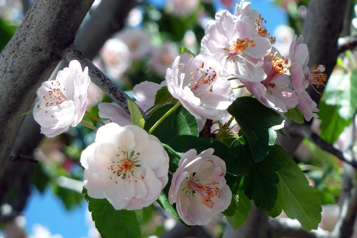 поебывает фотографии цветущих фруктовых деревьев она бросила эстраду