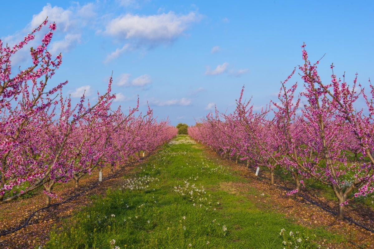 images gratuites arbre la nature fleur ciel champ ferme prairie feuille produire. Black Bedroom Furniture Sets. Home Design Ideas