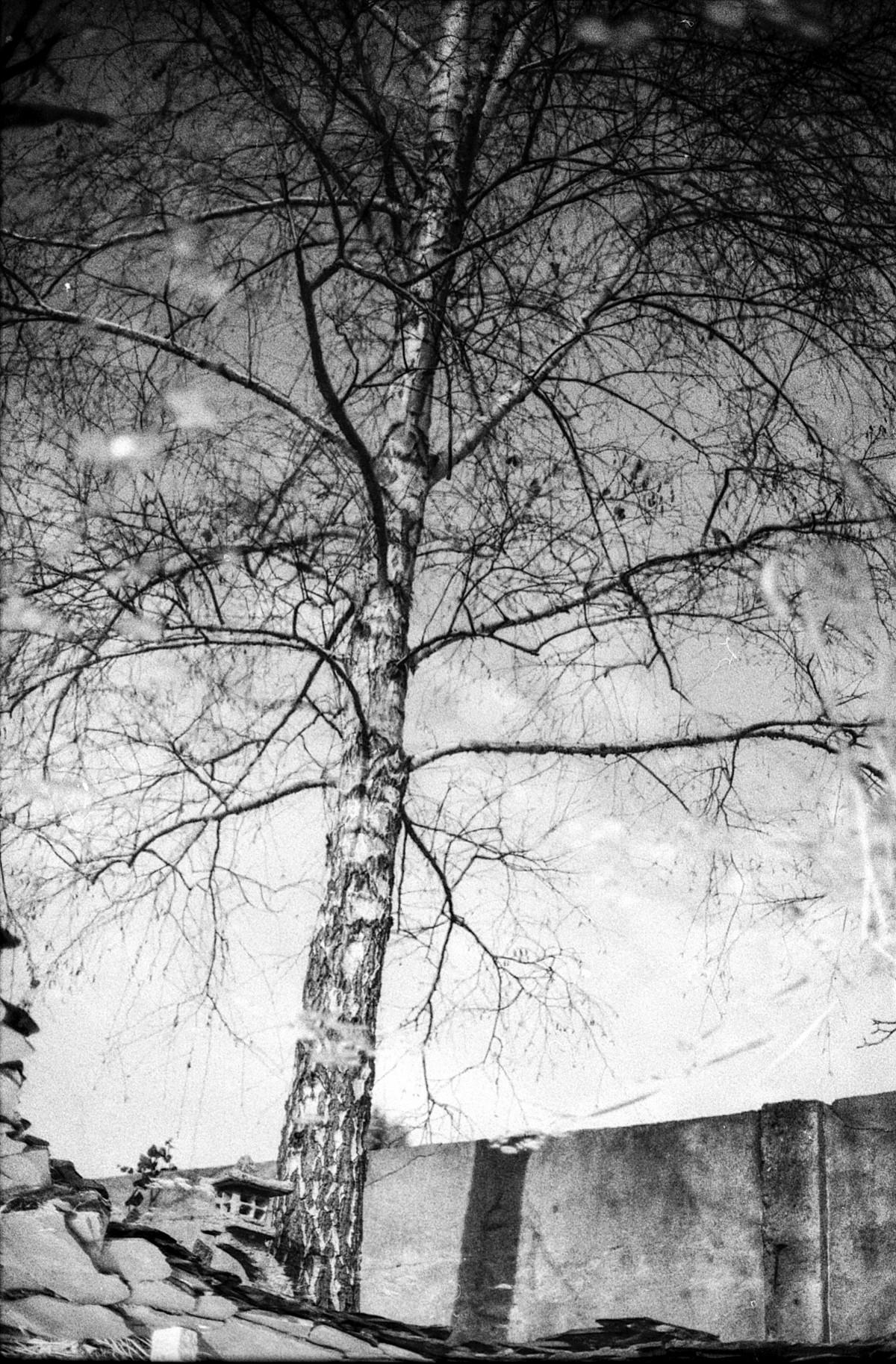 Fotos gratis rbol bosque rama invierno en blanco y for Arboles en invierno