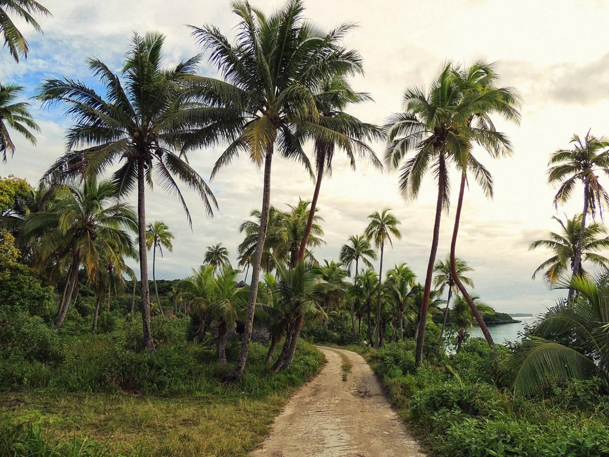 Images gratuites plage c te arbre jungle produire for Plante jungle
