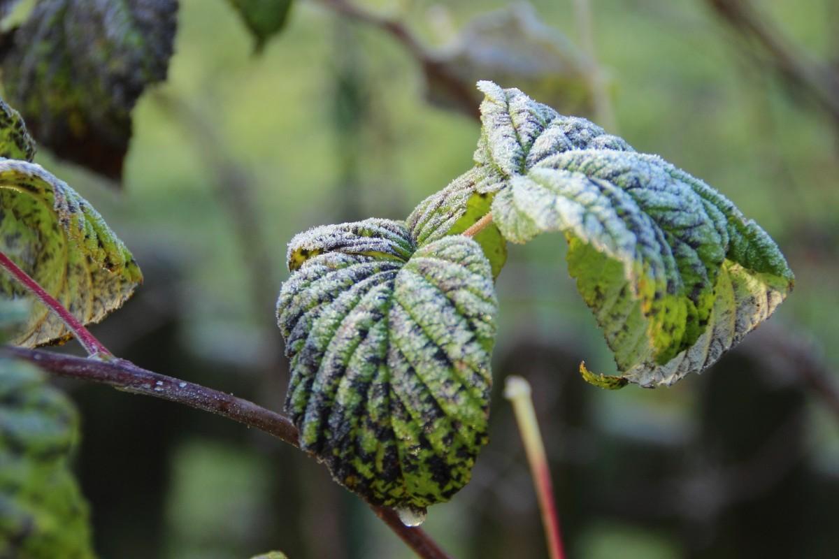 rbol naturaleza rama fro invierno planta