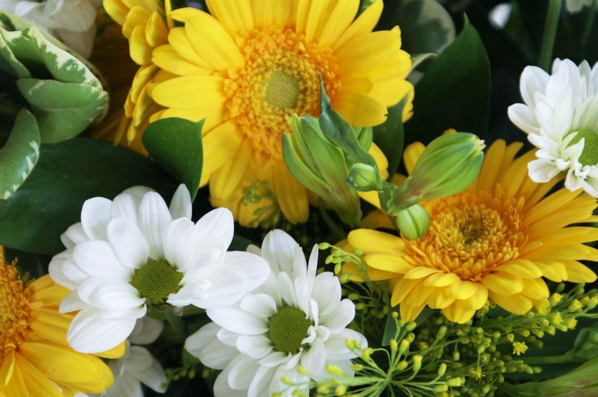 Free images petal color botany colorful flora floristry plant white flower petal daisy bouquet izmirmasajfo