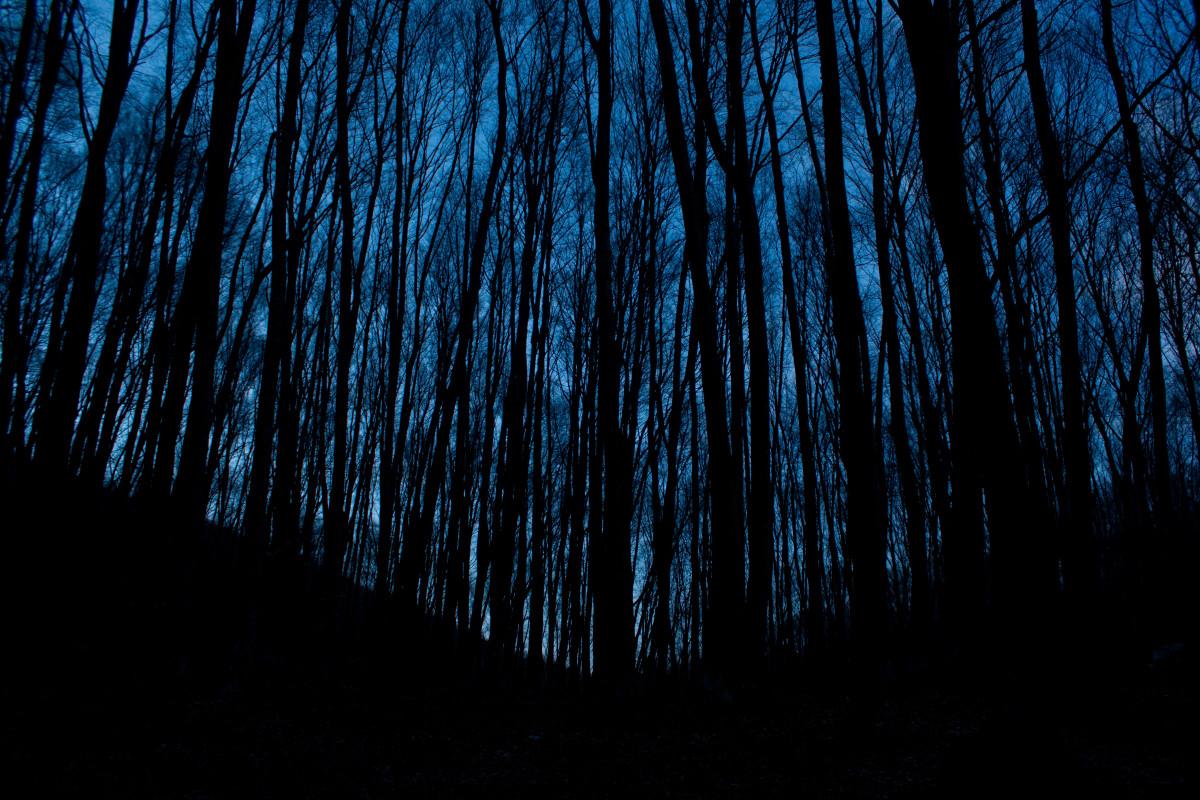 Gambar Pohon Hutan Cabang Cahaya Malam Sinar Matahari