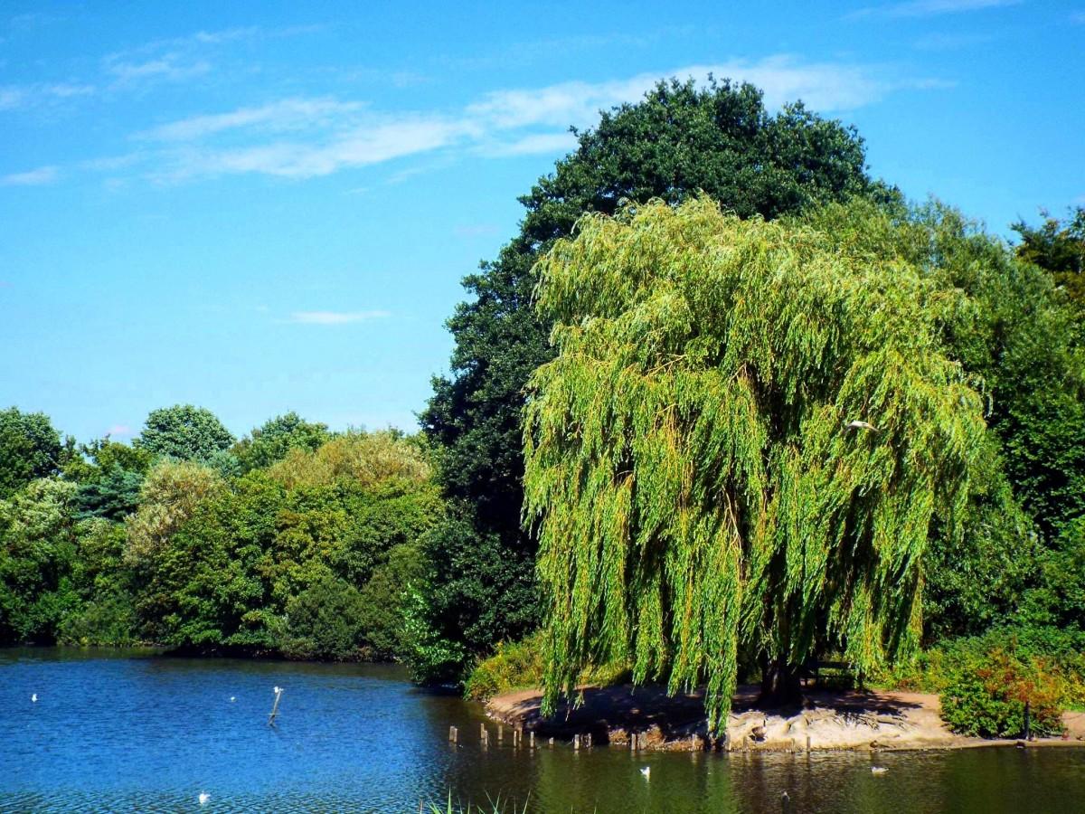 Деревья у воды картинки