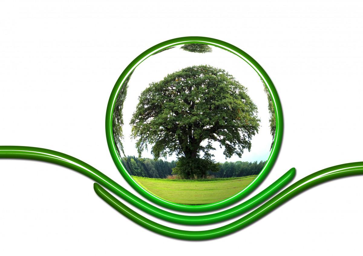 arbre herbe plante environnement ligne vert cercle globe monde Eco écologie Terre Mondialisation planète préservation protection protéger graphique global responsabilité la conception des produits Famille d'herbe