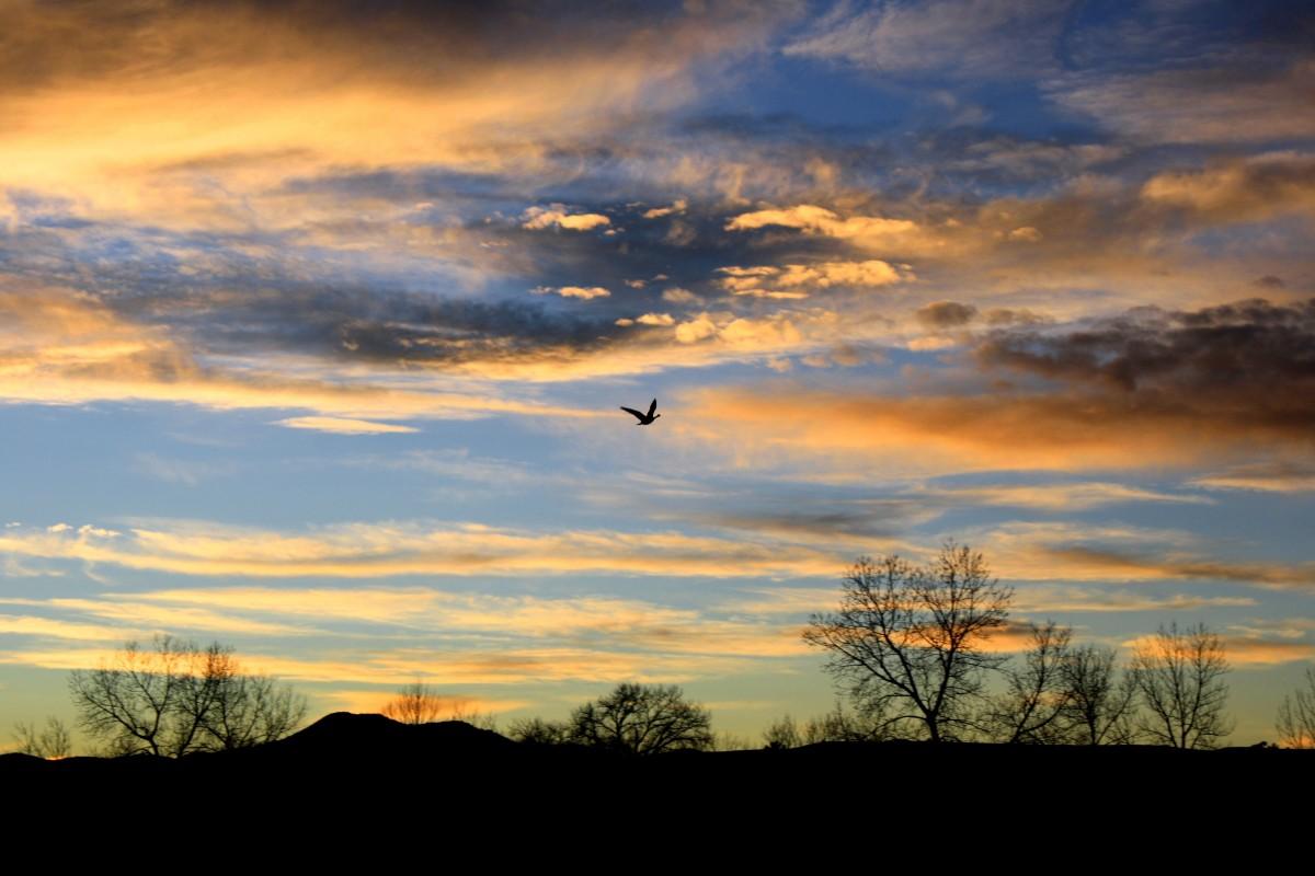 Free Images : Sea, Nature, Horizon, Cloud, Sunrise, Sunset