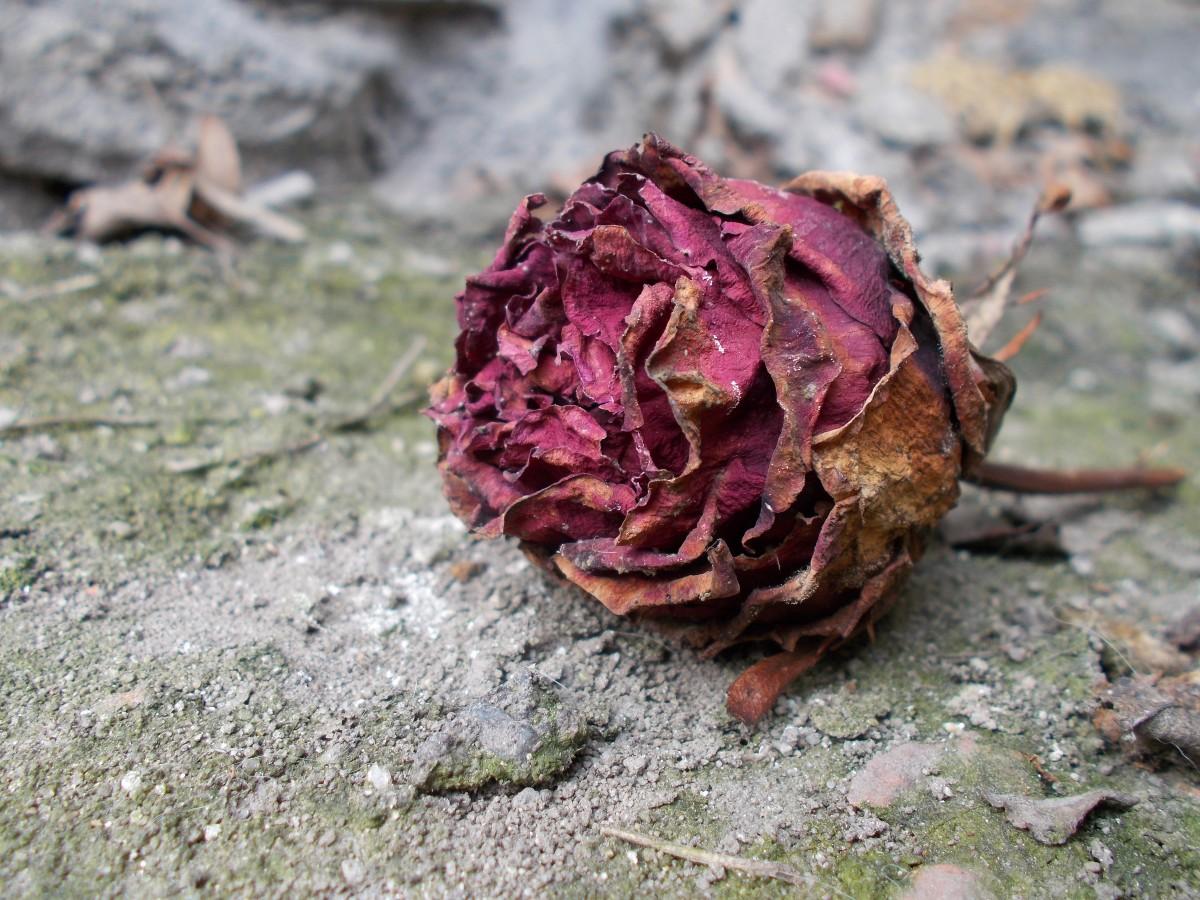 их, картинка засыхающего цветка отправить фото чтобы