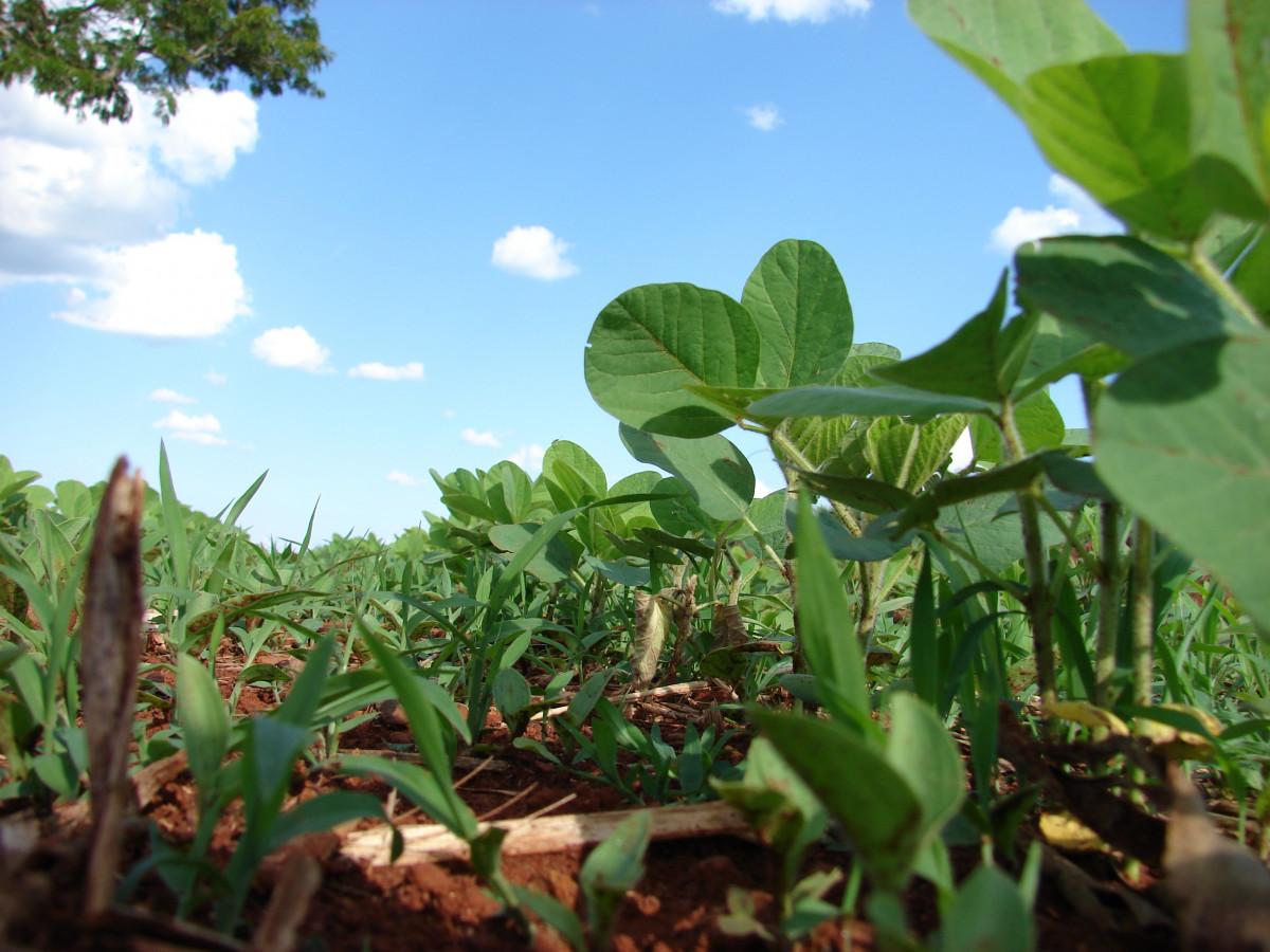 free images leaf flower food harvest jungle produce crop