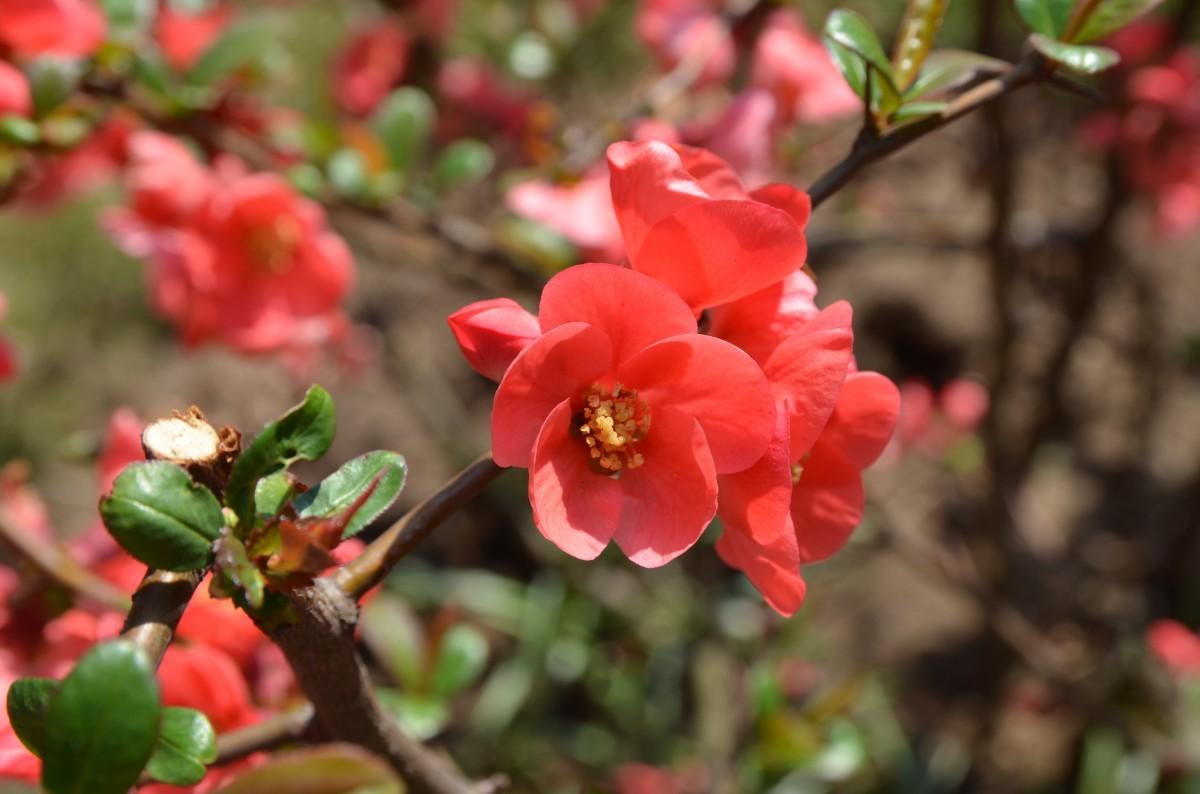 Immagini belle fiorire foglia fiore petalo rosso for Begonia pianta