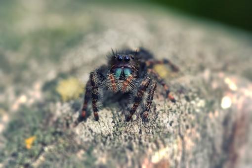 Free Images : ant, antenna, arachnid, close up, hairy ...