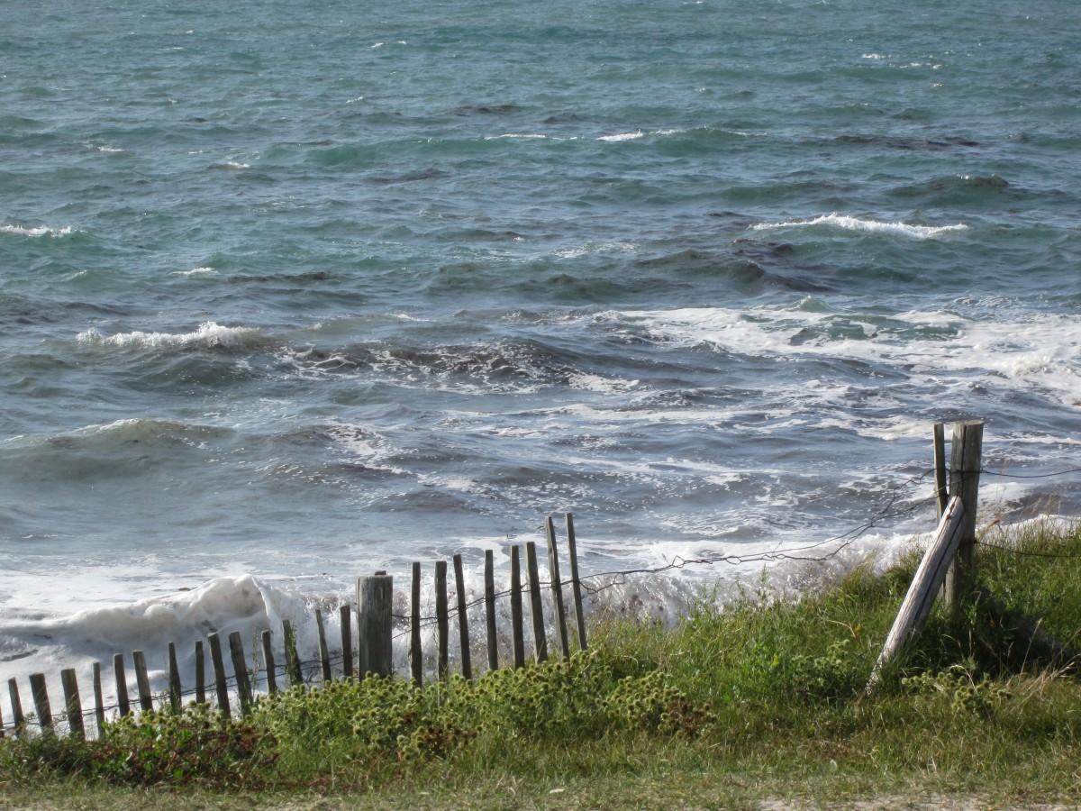 Images gratuites plage paysage c te arbre eau la - Plantes bord de mer atlantique ...