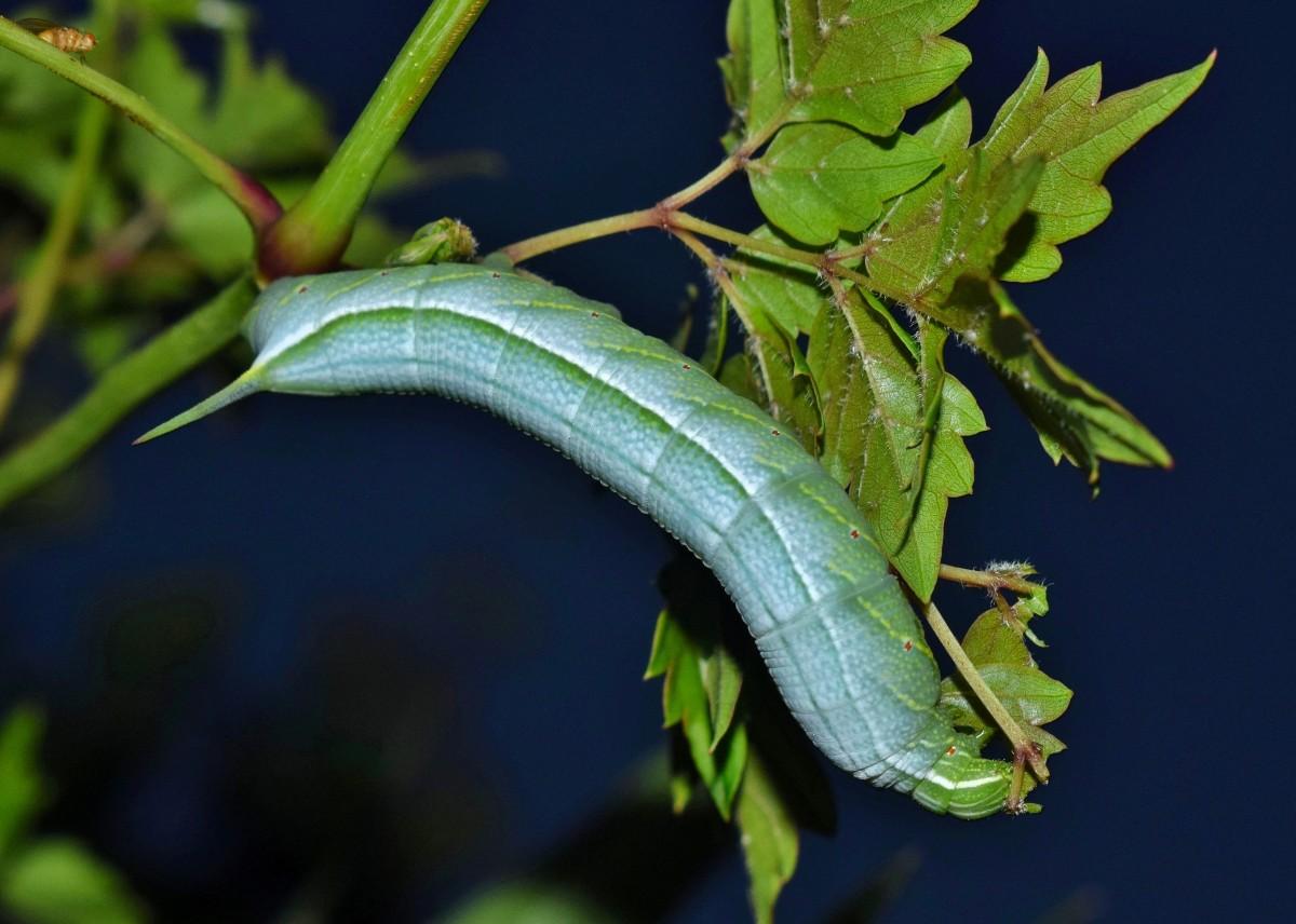Images gratuites arbre la nature feuille fleur vert - Insecte vert volant ...