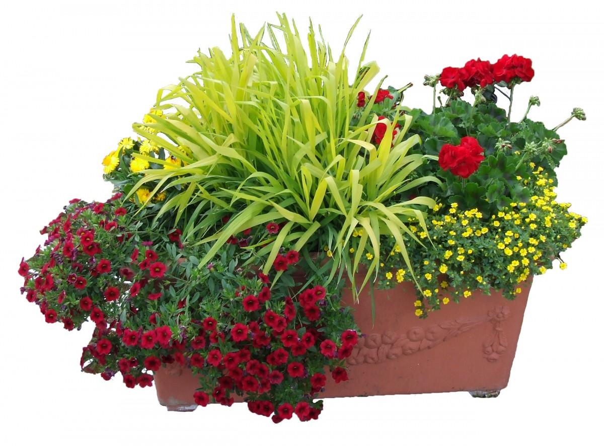 Images gratuites herbe acier carr jardin flore for Fleurs de fleuriste