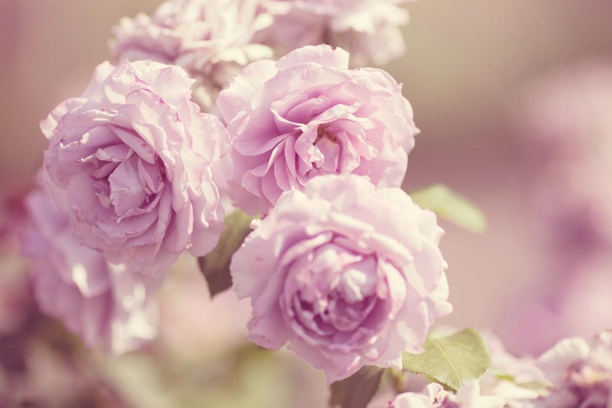 Нежные картинки на телефон цветы местом токаря