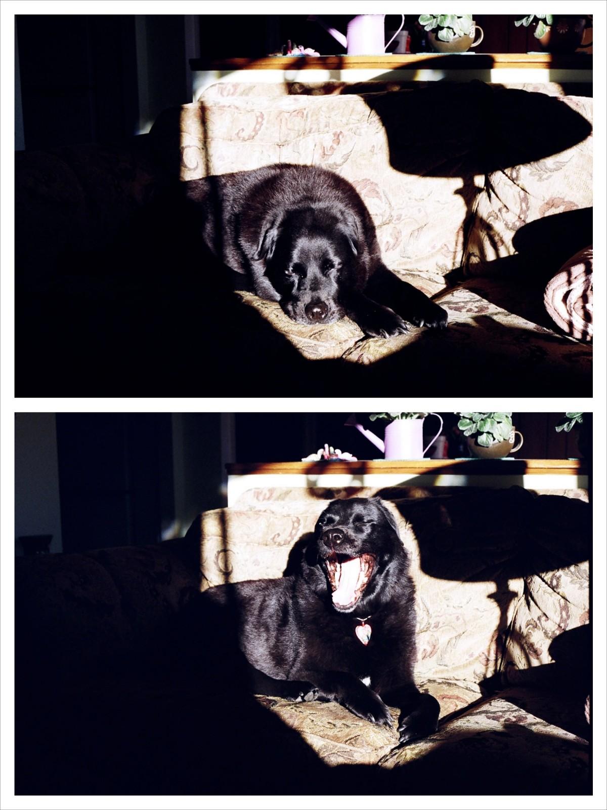 Fotos gratis : perro, película, baños del sol, gato negro, mascotas ...