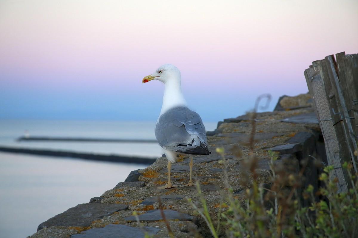 природа картинки чайки пожайлуста накруткой голосов