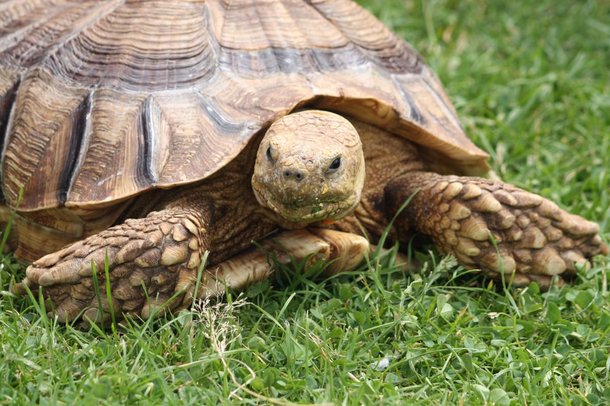 затягивании картинки черепаха город отказываются