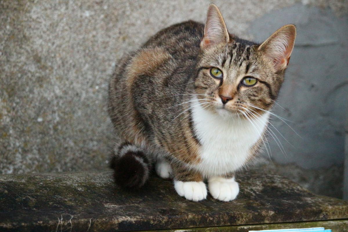 Картинки фото домашний кот