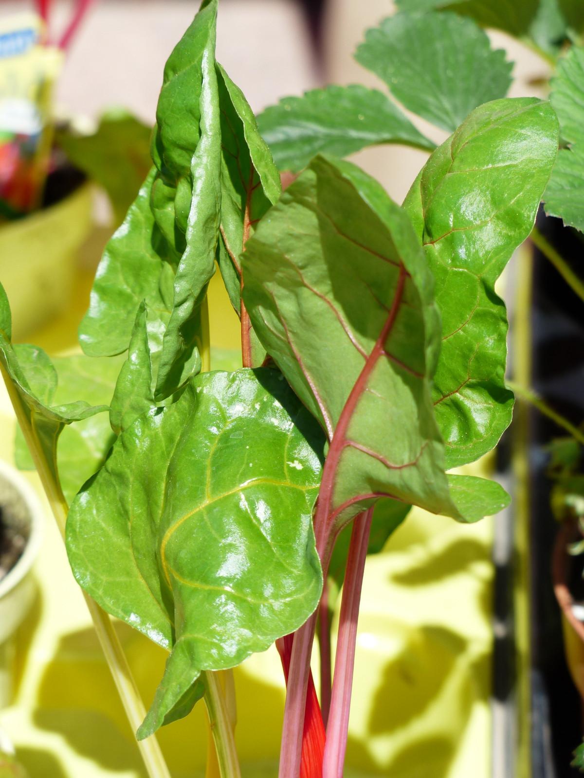 무료 이미지 : 식품, 샐러드, 녹색, 생기게 하다, 야채, 식물학 ...