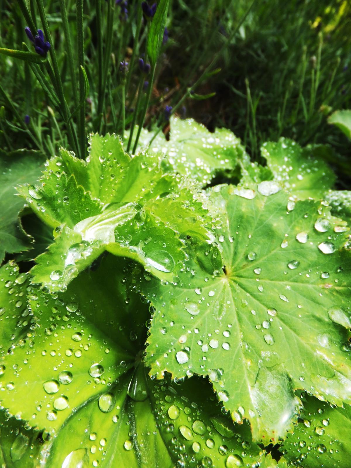 free images tree lawn leaf flower green herb. Black Bedroom Furniture Sets. Home Design Ideas