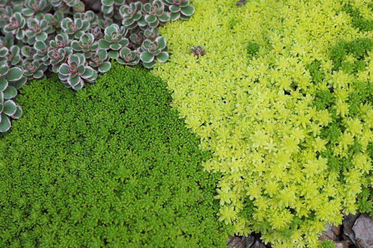 Images gratuites la nature herbe pelouse feuille for Solde plante jardin