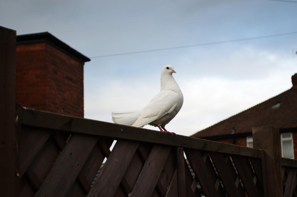 Free Images Bird Wing White Seabird Flying Symbol