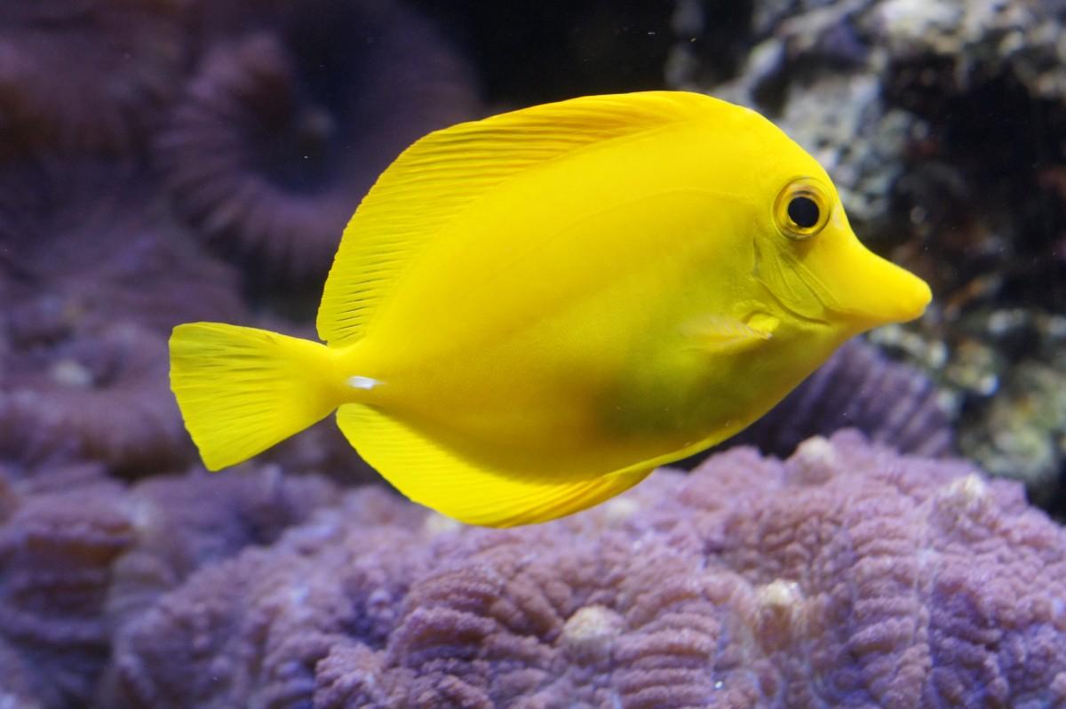 Images gratuites mer eau sous marin nager la for Jouet aquarium poisson