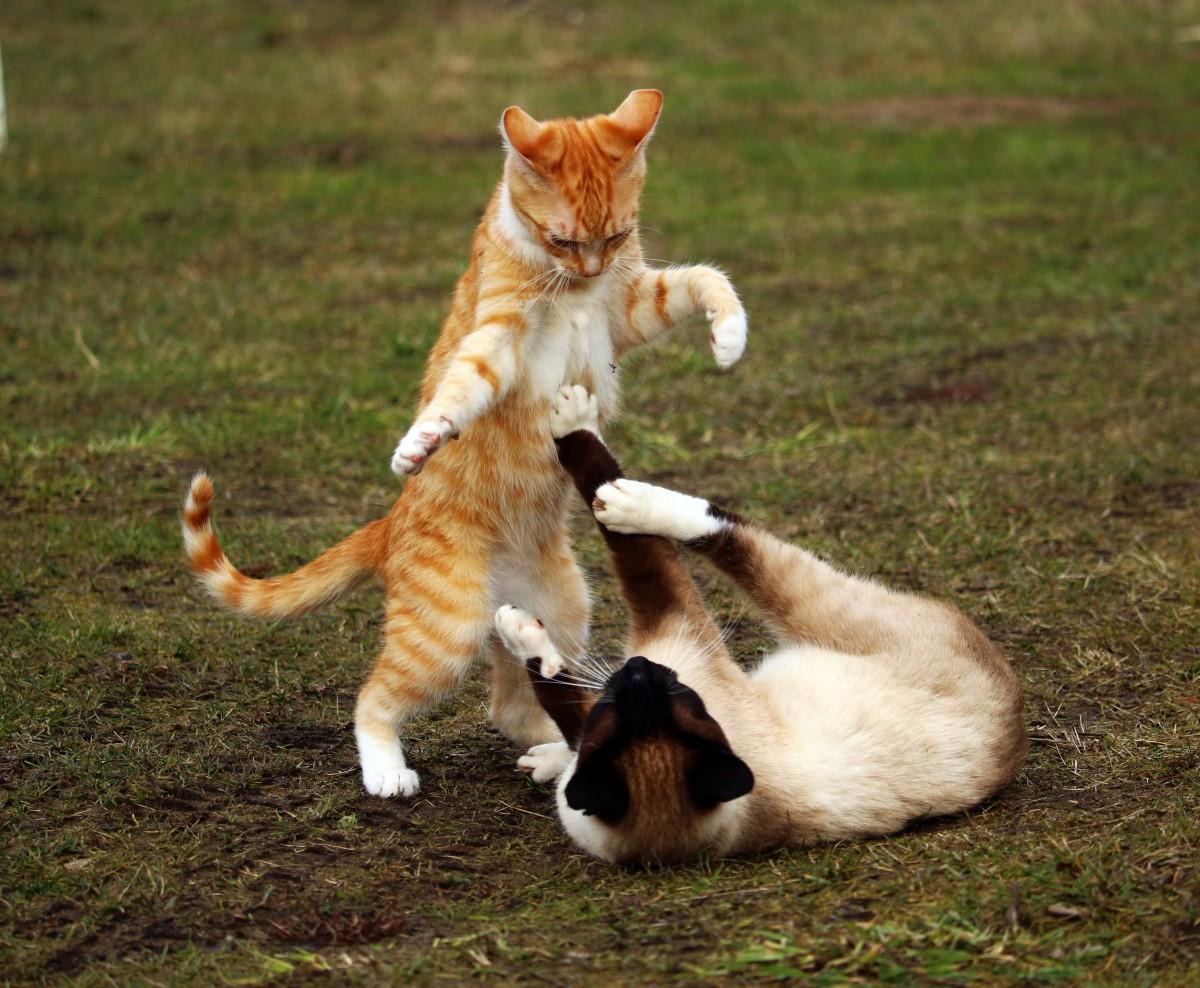 Картинки, смешные картинки коты дерутся