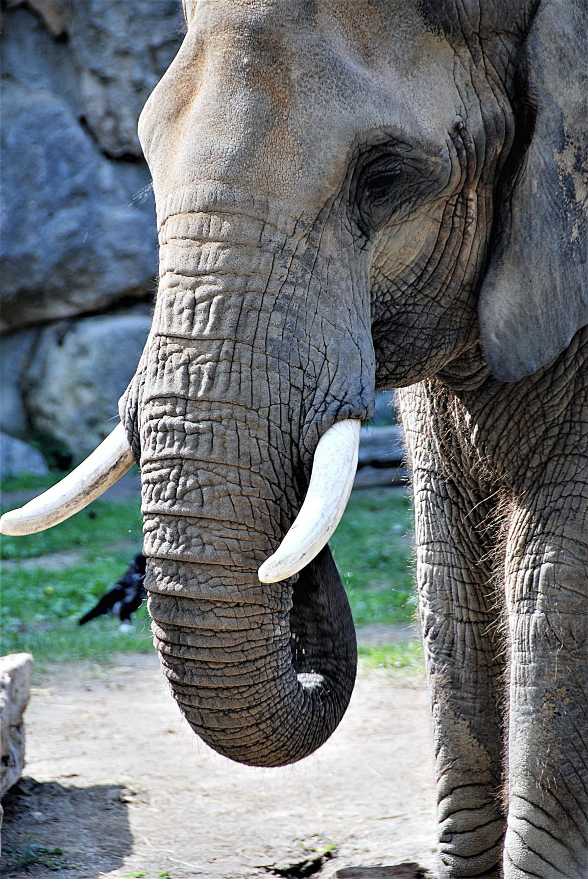 kostenlose foto  tierwelt zoo säugetier fauna