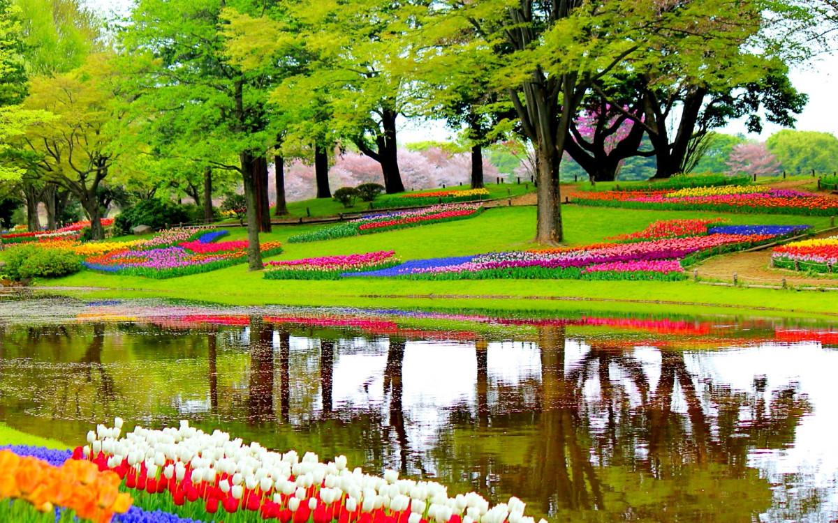 paysage arbre la nature herbe plante pelouse fleur Lac étang réflexion l'automne parc botanique Coloré jardin saison les plantes fleurs des arbres en plein air Pays-Bas Fleurs jardin botanique Tulipes Fleurit Keukenhof Lisse Jardin d'europe