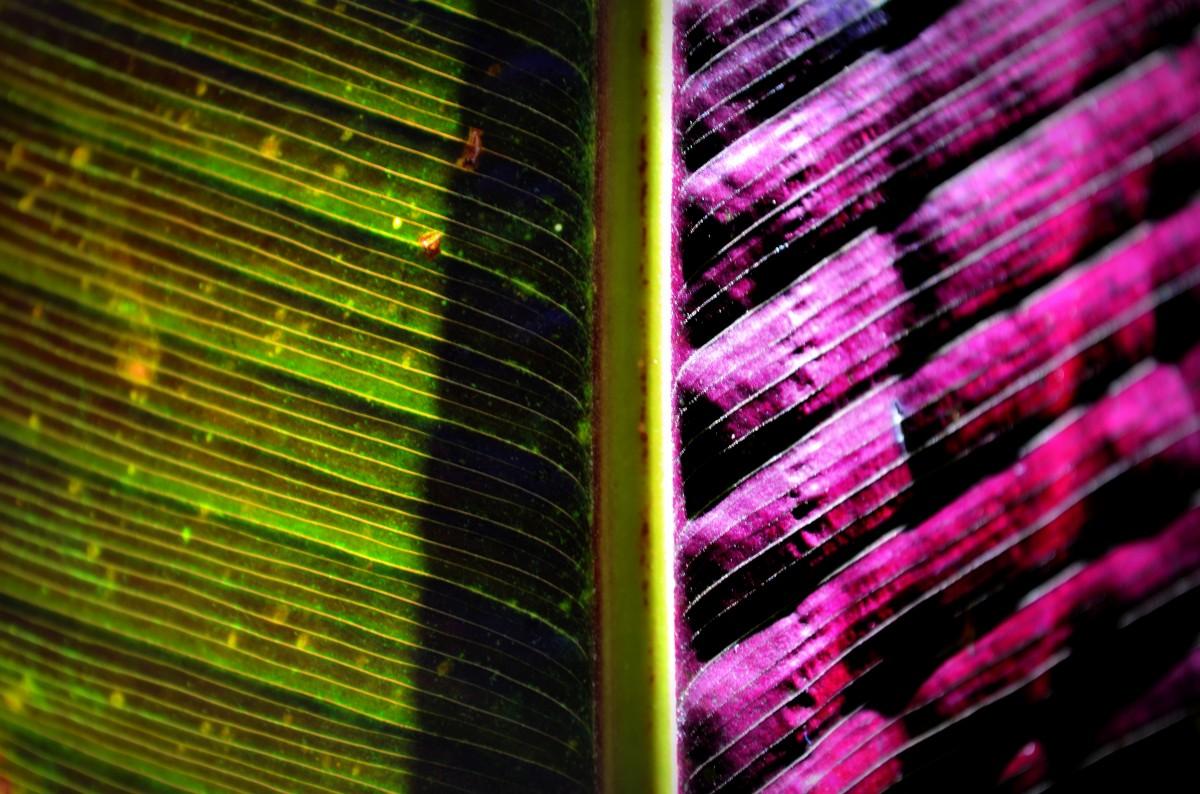 Gratis Afbeeldingen Licht Zonlicht Structuur Blad Bloem Lijn