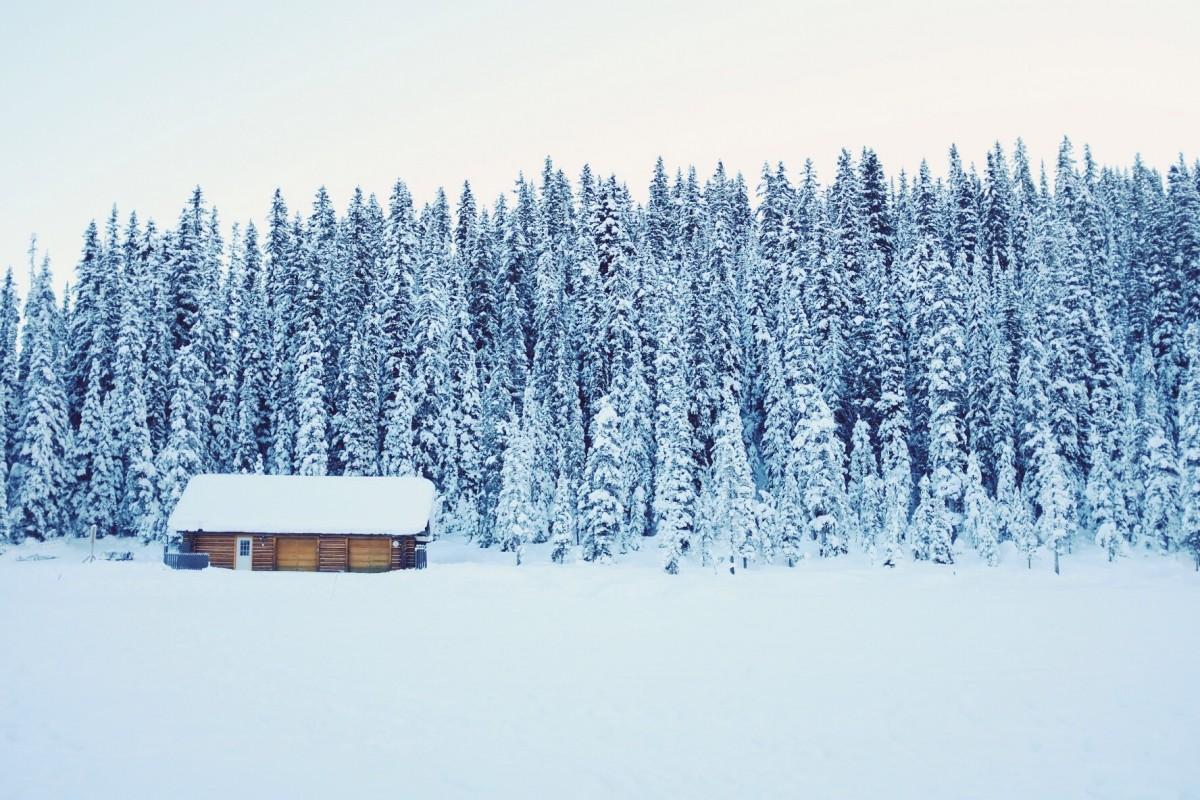 Bildet Tre Skog Sn 248 Vinter Frost Hytte Is V 230 R