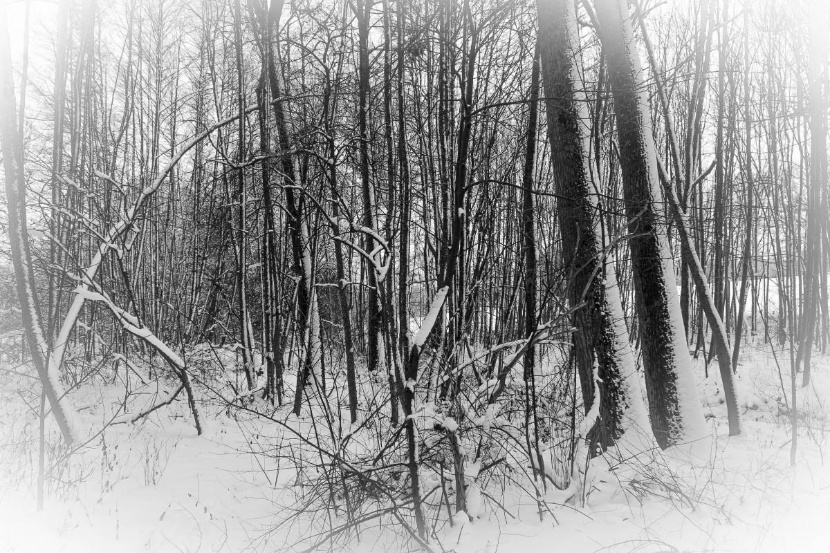 Immagini Belle : albero, ramo, inverno, bianco e nero, nebbia ...