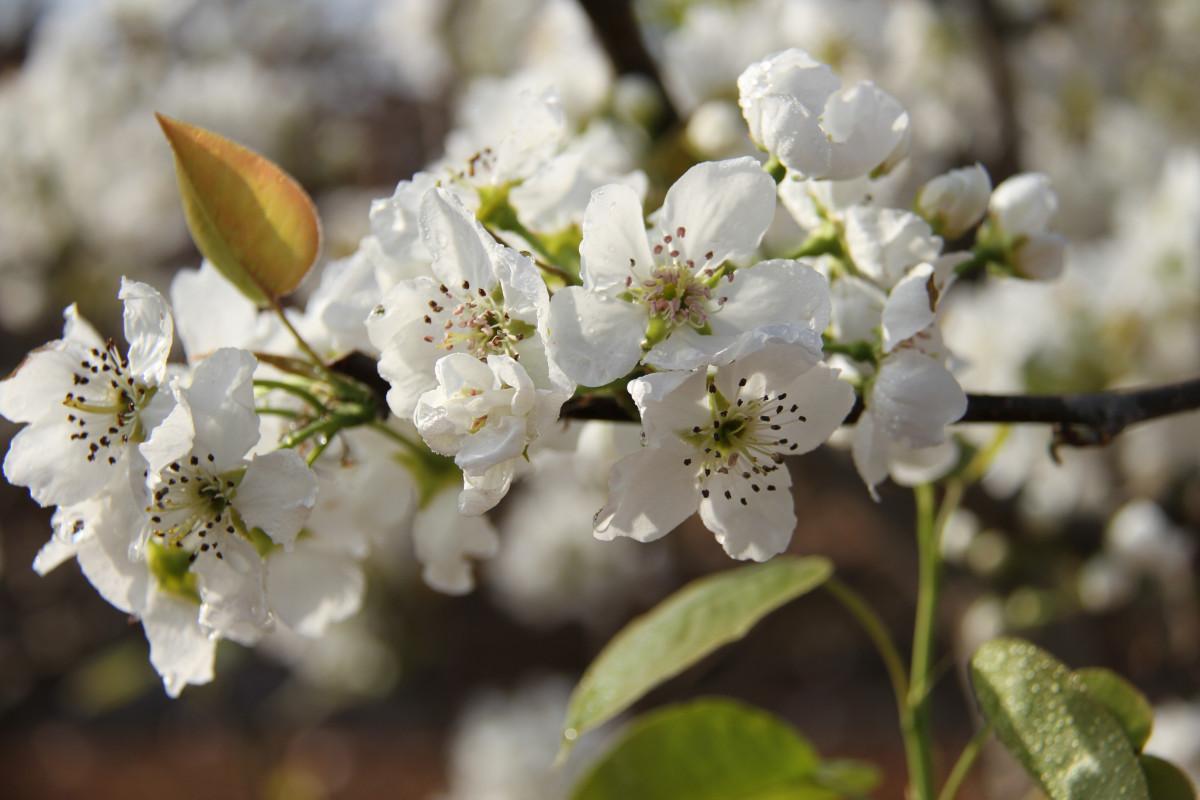 Что посадить на 6 сотках: деревья, растения, кустарники и цветы 62
