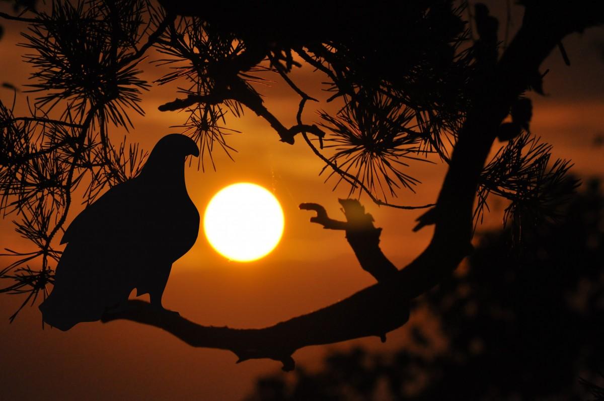 Gratis Afbeeldingen : boom, natuur, tak, silhouet, vogel, licht, zon ...