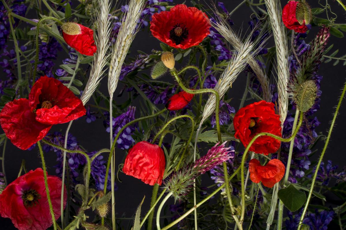 Images gratuites fleur p tale floraison rouge flore for Plante rouge