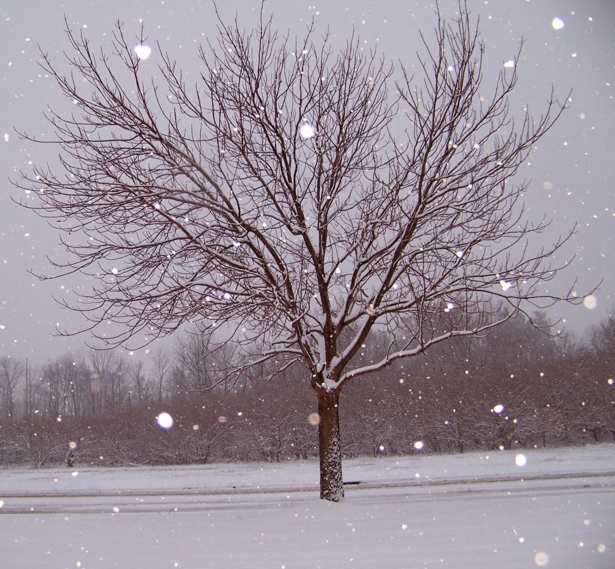 Snowy Twig Christmas Trees