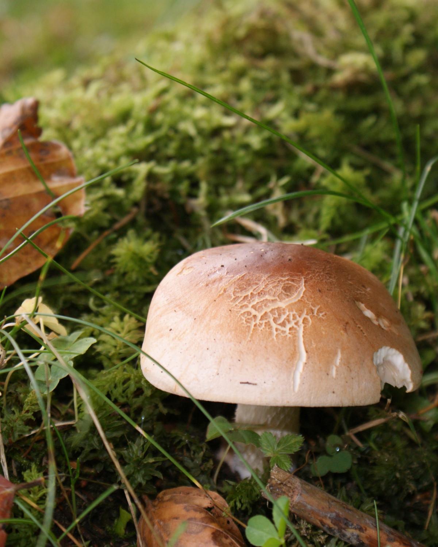 переводят страницу, показать очень красивые картинки съедобных грибов поговорим обо всех