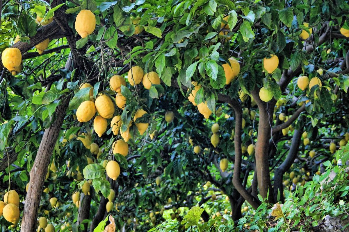 фрукты растут на деревьях картинки честно