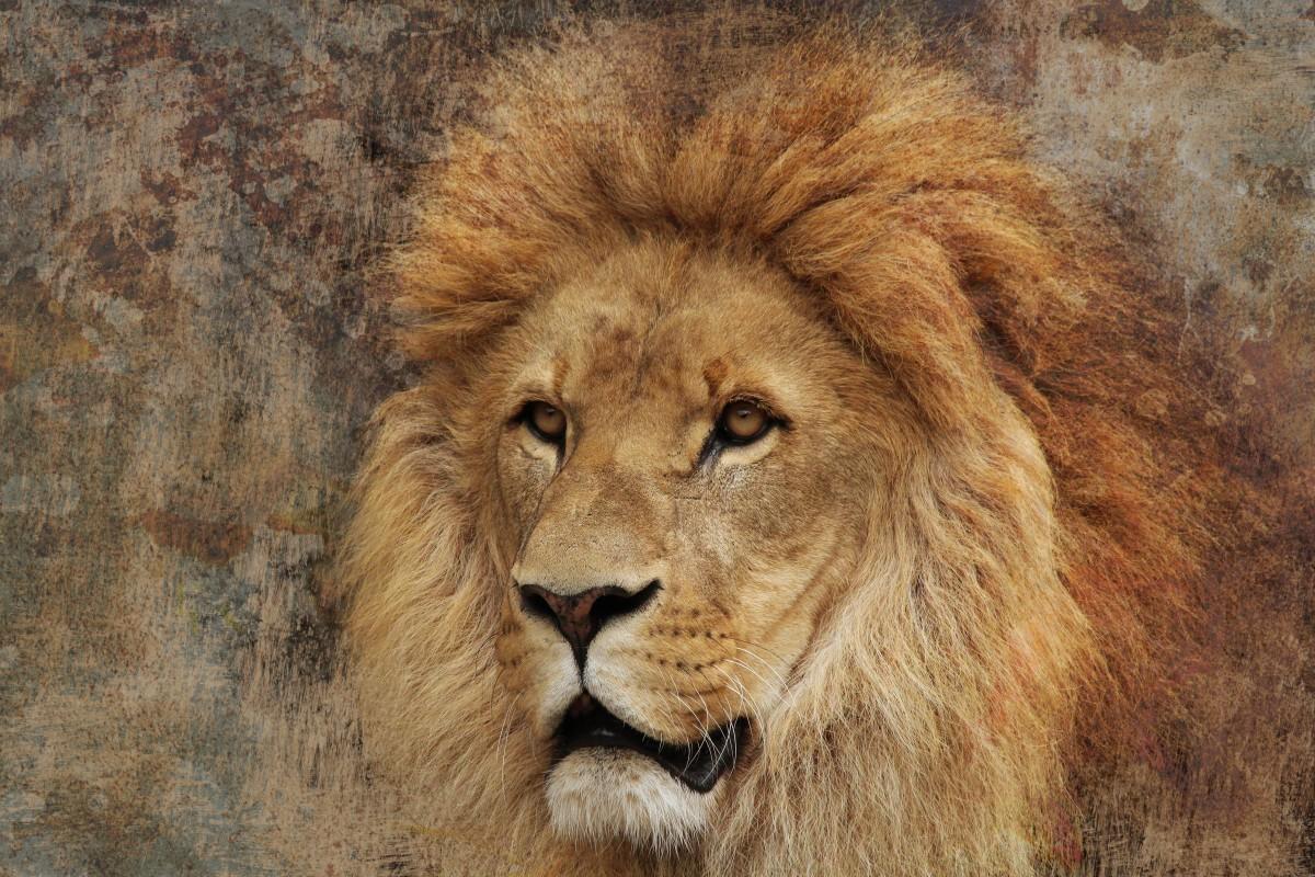 картинки гордость льва этом уже поговорим