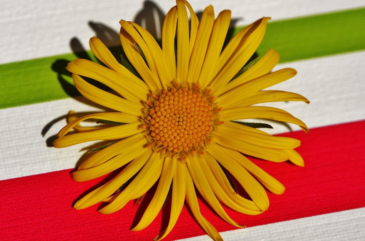 Fotos gratis hoja flor p talo primavera verde - Cortar hierba alta ...