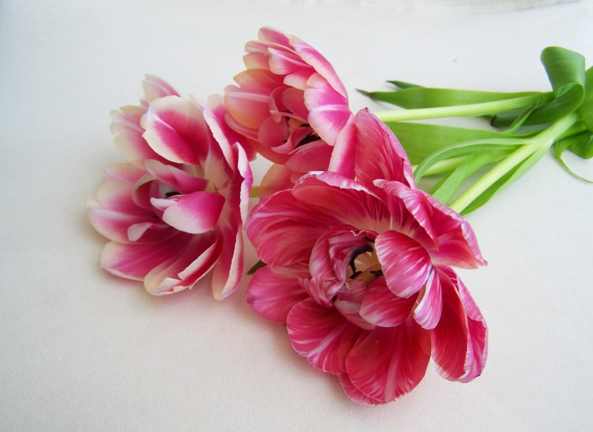 Images gratuites fleur p tale bouquet de tulipes for Fleurs de fleuriste